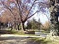 Avenida en Altomacul - panoramio.jpg