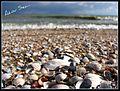 Azov sea beach (2118236323).jpg