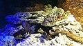 Béziers - Aquarium Polygone 02.jpg