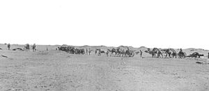 South Arabia during World War I - British Camel Battery of BLC 15 pounder guns after the capture of Hatum on 5 January 1918. Teams of four camels in two pairs are seen towing a gun and limber at left and right of picture. In the centre appears to be an ammunition limber towed by three camels.