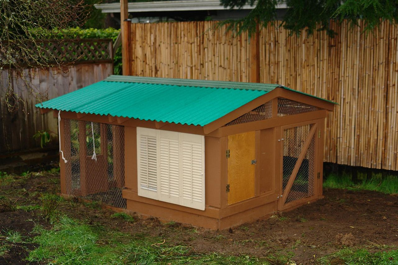 File backyard chicken wikimedia commons for Chicken coop dimensions