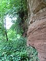 Badger Dingle - sandstone cliff.jpg