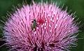 Badlands Flowers- Red, Pink, Blue (de21bb45-ebf3-4206-8c16-d452a79e57db).jpg