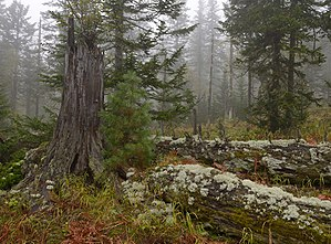 Baikal Nature Reserve - Image: Baikal reservate 2