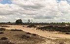 Balloërveld, natuurgebied in Drenthe 019.jpg