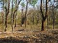 Bandipur Tiger Reserve - panoramio (18).jpg