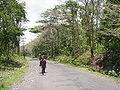 Baratang Andaman 4170086.JPG