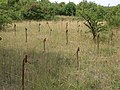 Barbed Wire and ground spear (21648741412).jpg