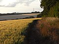 Barley, Hannington - geograph.org.uk - 1590749.jpg