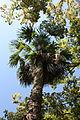 Batumi Botanical Garden (21).jpg