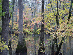 Bayou DeView Arkansas in the Cache River National Wildlife Refuge.jpg