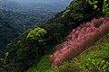 Bear Mountain (熊空附近林場) - panoramio (2).jpg