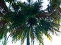 Beauty of Coconut.jpg