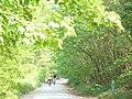 Bedgebury Forest - geograph.org.uk - 796986.jpg