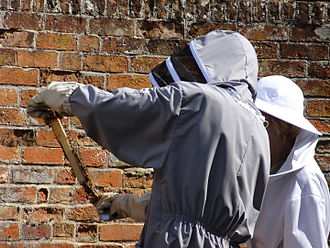 Cressing Temple - Beekeeping in the Tudor gardens, at Cressing Temple