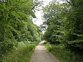 Beechen Lane, New Forest - geograph.org.uk - 35904.jpg