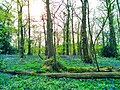 Belvedere, UK - panoramio.jpg
