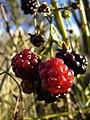 Berries7 (308695795).jpg