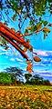 Bery fruit tree.jpg