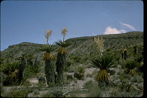 Big Bend National Park BIBE0620.jpg