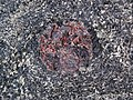 Big garnet amphibolite (Precambrian; Warrensburg, Adirondack Mountains, New York State, USA) 38.jpg
