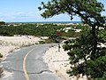 Bike trail in Ptown - panoramio.jpg