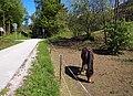 Bikeway and horse.jpg