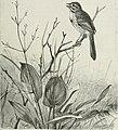 Bird-lore (1899) (14753196304).jpg