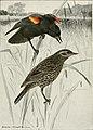 Bird-lore (1907) (14568919690).jpg