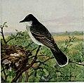 Bird-lore (1915) (14568721369).jpg