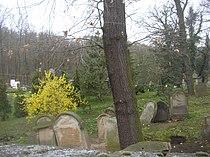 Blevice CZ Jewish cemetery 191.jpg