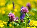 Blooms50 (9092412093).jpg