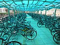 Blue Bike Shelter, Peking University, June 22, 2010 - panoramio.jpg