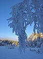 Blue winter day (2130439471).jpg