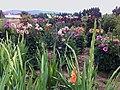 Blumenfeld am Schmidener Weg - panoramio.jpg