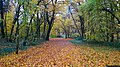 Bois Bourgeois 20201101.jpg