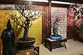 Bonsai Osaka-tenmangu01-r.jpg