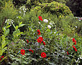Border flowers Clavering Essex England.jpg