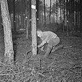 Bosbewerking, arbeiders, bomen, gereedschappen, zagen, Bestanddeelnr 251-9124.jpg