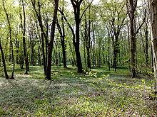 Bosco di querce (Parco naturale lombardo della Valle del Ticino)