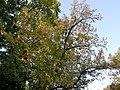 Botanični vrt (3990153711).jpg