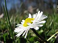 Botanic Garden - Cluj-Napoca (2371216999).jpg