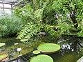 Botanischer Garten Leipzig 6.JPG