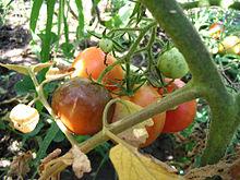 früchte braun bad füssing