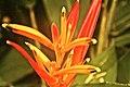 Brazil flora.jpg