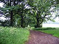 Bridleway to Elemore School - geograph.org.uk - 464355.jpg