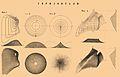 Brockhaus and Efron Encyclopedic Dictionary b84 599-1.jpg