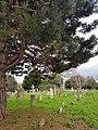 Brompton Cemetery – 20180204 133045 (26294298088).jpg
