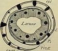 Bulletin de la Soci neuchloise des sciences naturelles (-1898) (20247554398).jpg