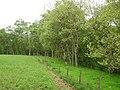 Burnbrae Wood - geograph.org.uk - 188997.jpg